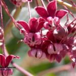 Photography on Stockton Creek Nature Preserve @ Stockton Creek Nature Preserve | Mariposa | California | United States