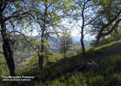 tm-oak-vista-ecalhoun-110410