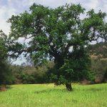 Native Plants and Geology on Bohna Ranch @ Bohna Ranch