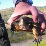 turtle-picture