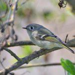 Birding Hike on McKenzie @ McKenzie Table Mountain Preserve | Clovis | California | United States
