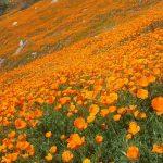 Open Preserve Day - Fine Gold Creek Preserve @ Fine Gold Creek | Friant | California | United States