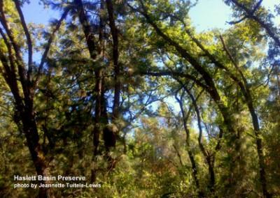 hb-oaks-jtuitele-110830