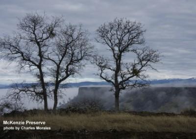 mck-foggy-trees-cmorales-130125