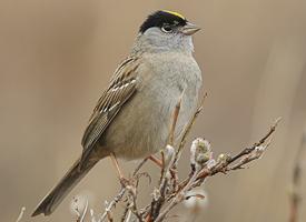 Birding Hike on Clark's Valley @ Bootjack Market | Mariposa | California | United States