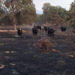 Trabucco Wildfire Class Spring 2018 @ Mariposa Park & Ride | Mariposa | California | United States